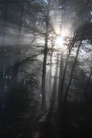 against the flow: Sun in forest sunrise Stock Photo