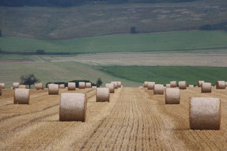 Straw bales photo