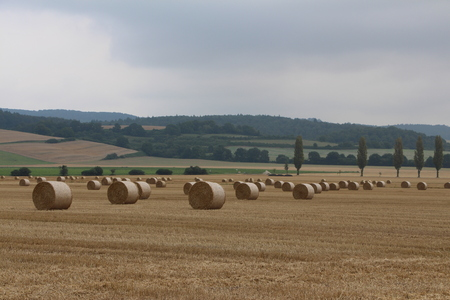 Straw bales after harvest photo