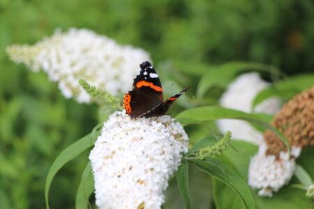 pflanze: Schmetterling auf einer Pflanze Stock Photo
