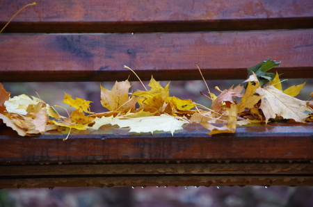 Leaves on a bench in autumn photo