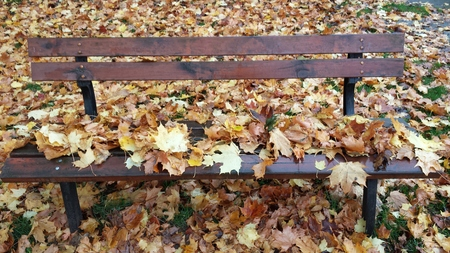 Leaves on a park bench photo
