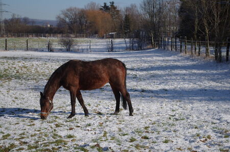 caballo bebe: Un caballo Foto de archivo