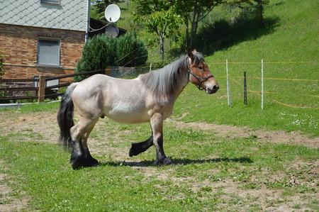 caballo bebe: Un caballo en un prado