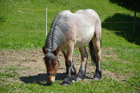 caballo bebe: Brown Horse Foto de archivo