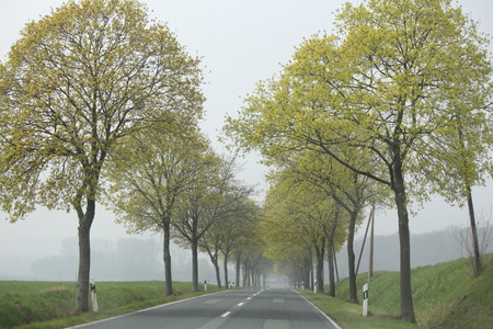 Fog in autumn in the street Stock Photo