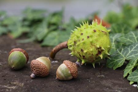 close p: Chestnut and hazelnut Stock Photo