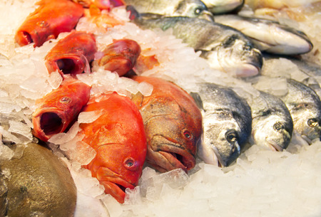 A row of carps is waiting for buyers at the market.