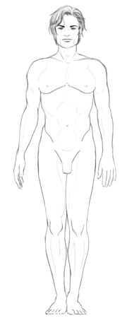 Male basic proportions