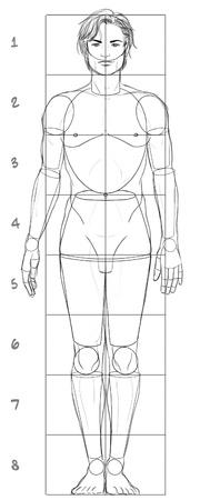 partes del cuerpo humano: Hombre proporciones básicas Foto de archivo