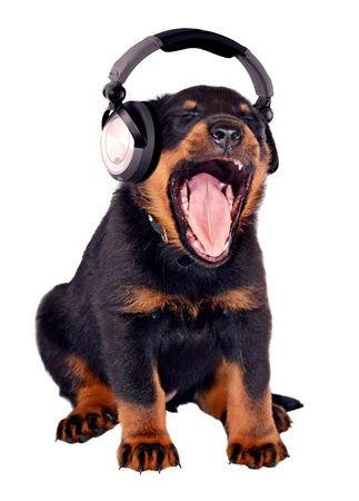 Puppy listening to music