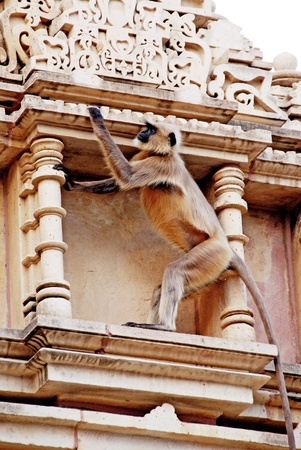 Monkey on an old monument in india