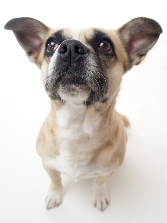 snouts: dog