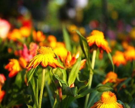 Beautiful field of flowers in Louisville, Kentucky.