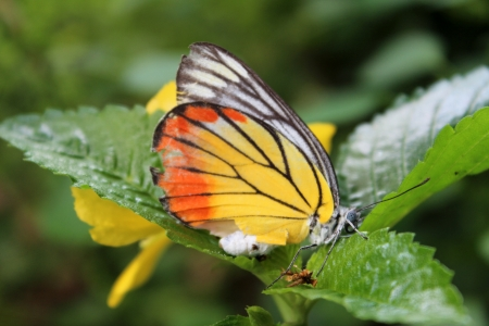 yelllow: A colorful butterfly and yelllow flower