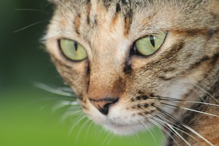 The closeup big eye's cat  catching on you Stock Photo - 17597400
