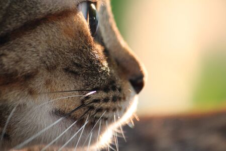 a closeup head brown cat with light Stock Photo - 17597401