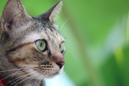 a green background with lovely cat for wallpaper Stock Photo - 17597409