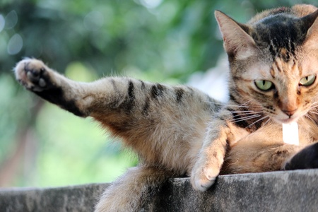 a cat lift his leg up while sitting on the wall Stock Photo - 17597408