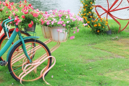 the flowers on the bicycle in the garden  photo