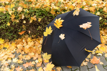 Wind and rain symbol photo - Leaves / leaves are blown by the wind on umbrella Standard-Bild