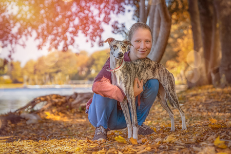 a young girl cuddles with her whippet dog Stockfoto