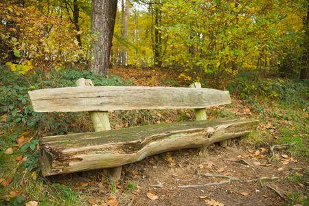 bench park: Banca del parque en un bosque