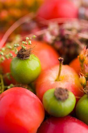 dried flower arrangement: Dried flower arrangement for autumn