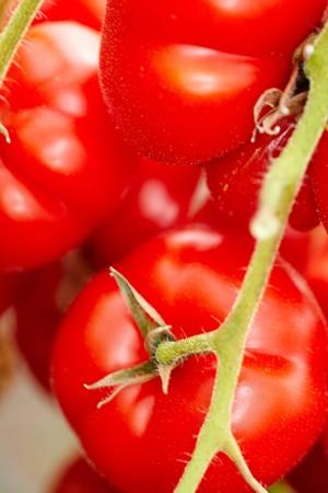 tomate de arbol: Detalle de tomates rojos maduros orgánico Solanum lycopersicum