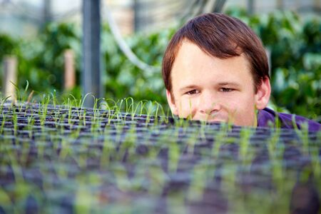 examiner: Farmer watching little seedlings in a greenhouse Stock Photo