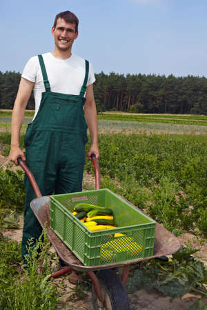 location shot: Organic farmer with a wheelbarrow full of courgettes Stock Photo