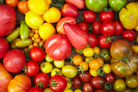 cherry tomatoes: Many different tomato breeds in a wooden box Stock Photo