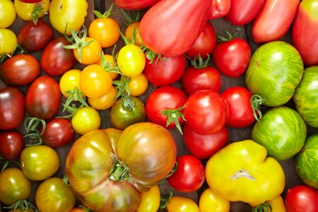 Many different organic tomatoes in a wooden box photo