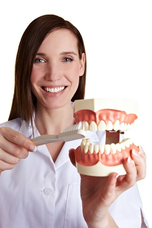 Smiling female dentist explains how to brush your teeth photo