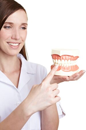 artificial teeth: Happy dentist pointing to artificial teeth model