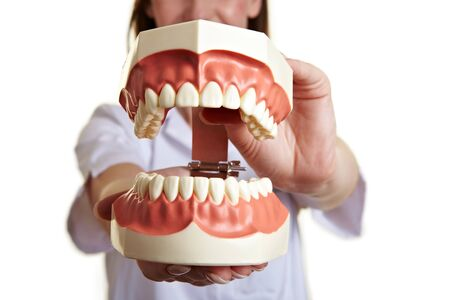 Dentist holding an oversized teeth model biting Stock Photo - 9515580