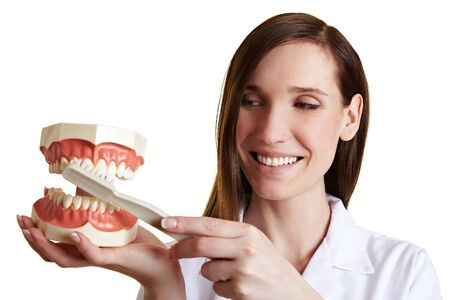 Happy dentist explains technique for brushing teeth on artificial model photo