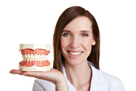 dentier: Happy dentiste femelle tenant un modèle de dents sur sa main Banque d'images