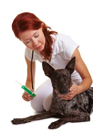Veterinarian giving dog deworming with a syringe photo
