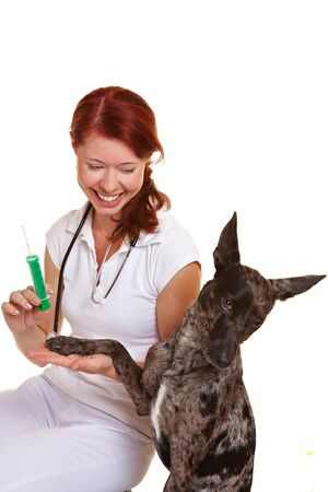 assistent: Smiling vet giving an injection in dog paw