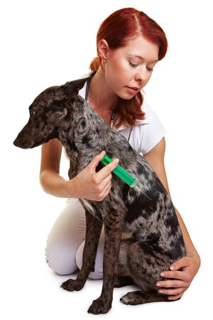 assistent: Dog getting injection from a female attractive vet