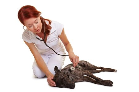 assistent: Examination of dog at female veterinarian with stethoscope Stock Photo
