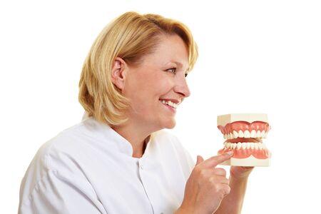 Happy female dentist showing oversized teeth model Stock Photo - 10582306