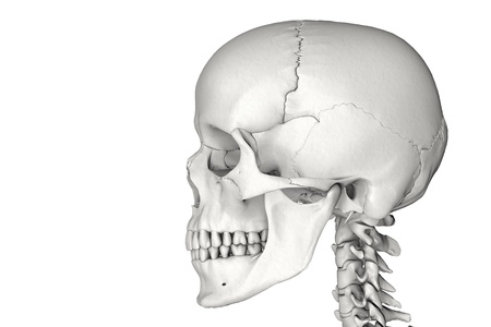 jaw: Anatomically correct human male skull in 3D Stock Photo