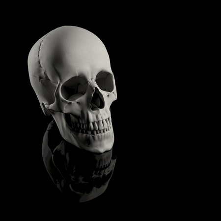 Human skull from a skeleton on a black background photo