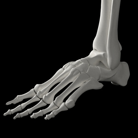 Foot with bones in 3D from a human skeleton photo