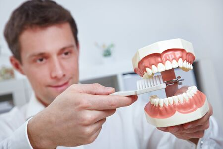 dental clinic: Dentist holding oversized teeth model and toothbrush in his office Stock Photo