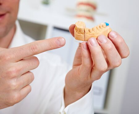 Dentist showing dental cast in his office Stock Photo - 14298346