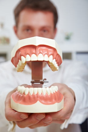 Dentist showing oversized open teeth model in his office photo