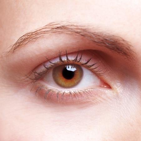 ojos marrones: Primer plano del ojo humano femenino con la ceja